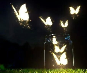 amazing, beauty, and butterflies image
