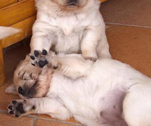 funny, surrender, and puppies image
