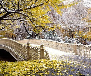 Central Park, bridge, and new york image