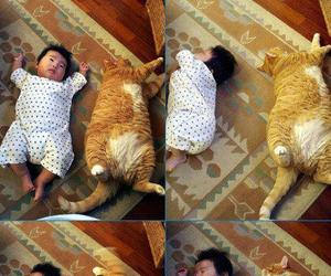 adorable, neko, and cat image