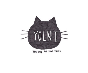 cats and yolnt image