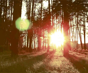 sun, forest, and tree image