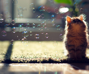 balloons, cat, and ♥ image