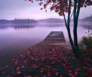 nature, lake, and tree image