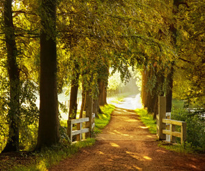 forest and path image