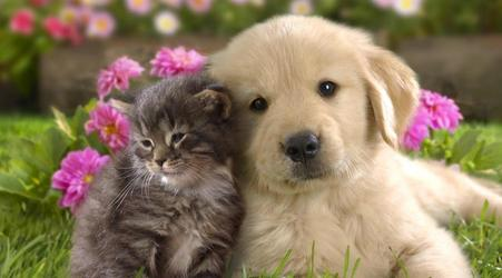 cat, dog, and friend image
