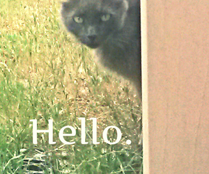 cat, hello, and pets image