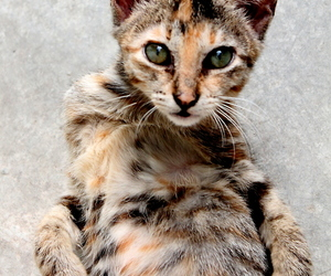 cat, sexy, and cute image