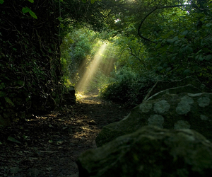 forest, green, and light image