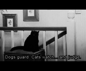 black and white, cats, and funny image