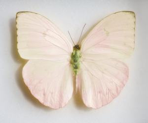 butterfly, indie, and pastel image