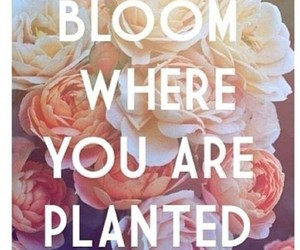 quote and bloom image