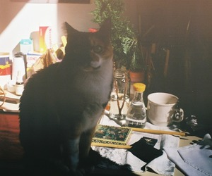 cat, Film Photography, and home image