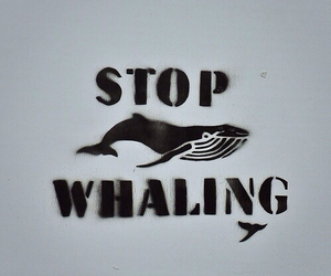 whales and norway image