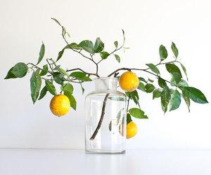 lemon, yome, and plant image