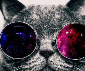 animal, crazy, and galaxy image