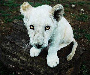 albino, white, and amazing image