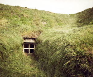 nature, window, and grass image