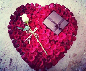 rose, love, and flowers image