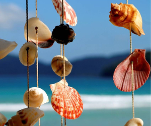 beach, sea, and shells image