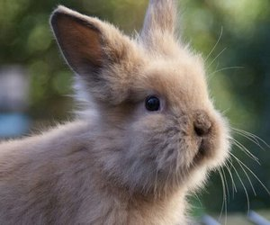 bunny, rabbit, and adorable image