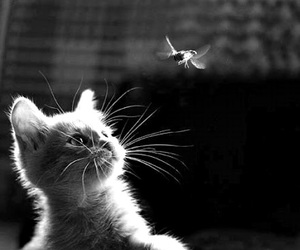 animal, black and white, and funny image