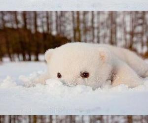 animal, polar, and cute image