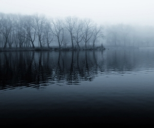 dark, forest, and lake image
