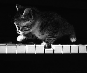 kitten, meow, and piano image