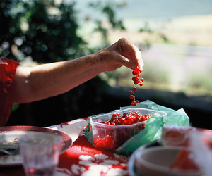 vintage, berries, and food image