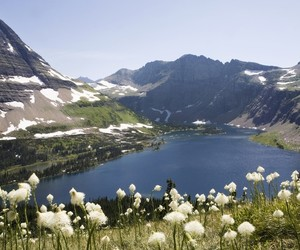 beautiful, flowers, and Glacier National Park image