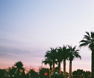 cali, palm tree, and socal image