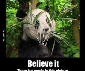 panda and funny image