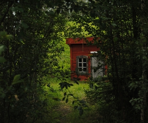 cozy, green, and forest image