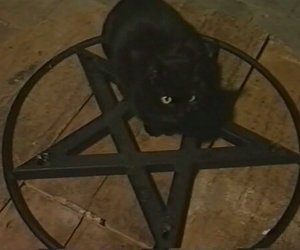cat, pentagram, and black image
