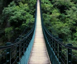 bridge, pretty, and travel image