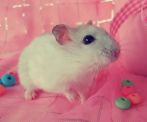animal, cute, and candy image