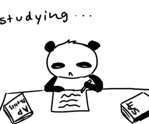 panda, studying, and quote image