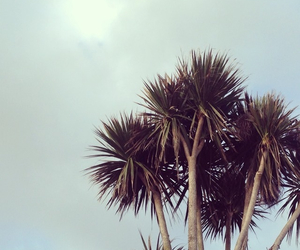bright, palm trees, and free image