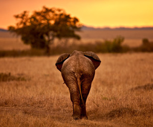 elephant, africa, and photography image