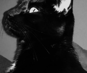 black&white, animals, and cats image