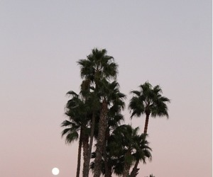 desert, moon, and palm tree image
