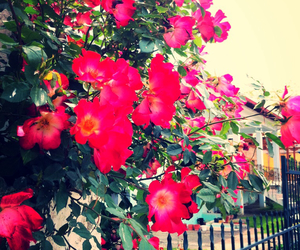 flowers, loveable, and red image