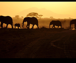 elephant, silhouette, and heartwarming nature crap image
