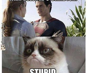funny, superman, and cat image