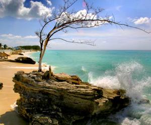 beach, ocean, and tree image