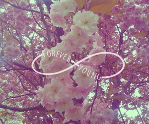 cherryblossom, forever, and infinity image