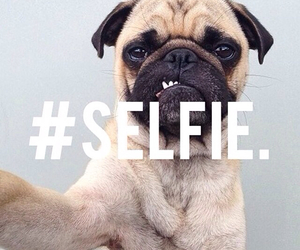 selfie, dog, and puppy image