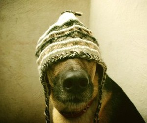 dog and hat image