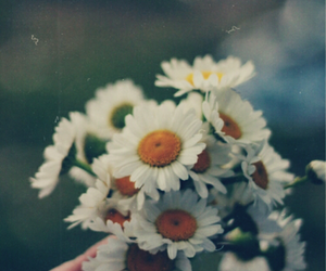 flowers, daisy, and vintage image